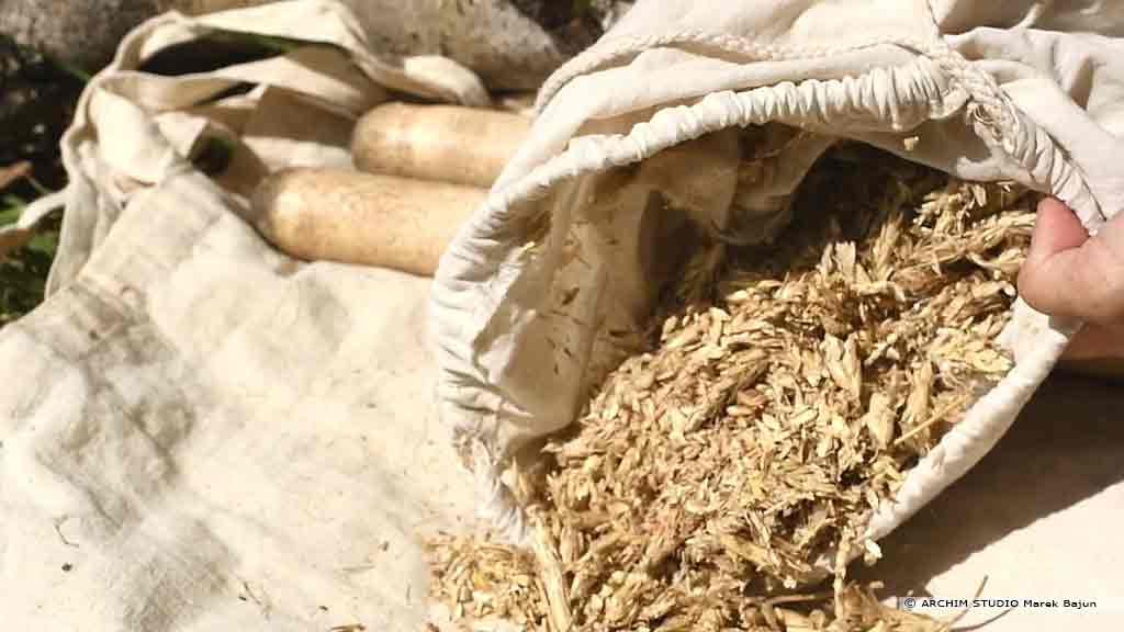 Własna mąka żytnia- rozdrobnione kłosy po młóceniu