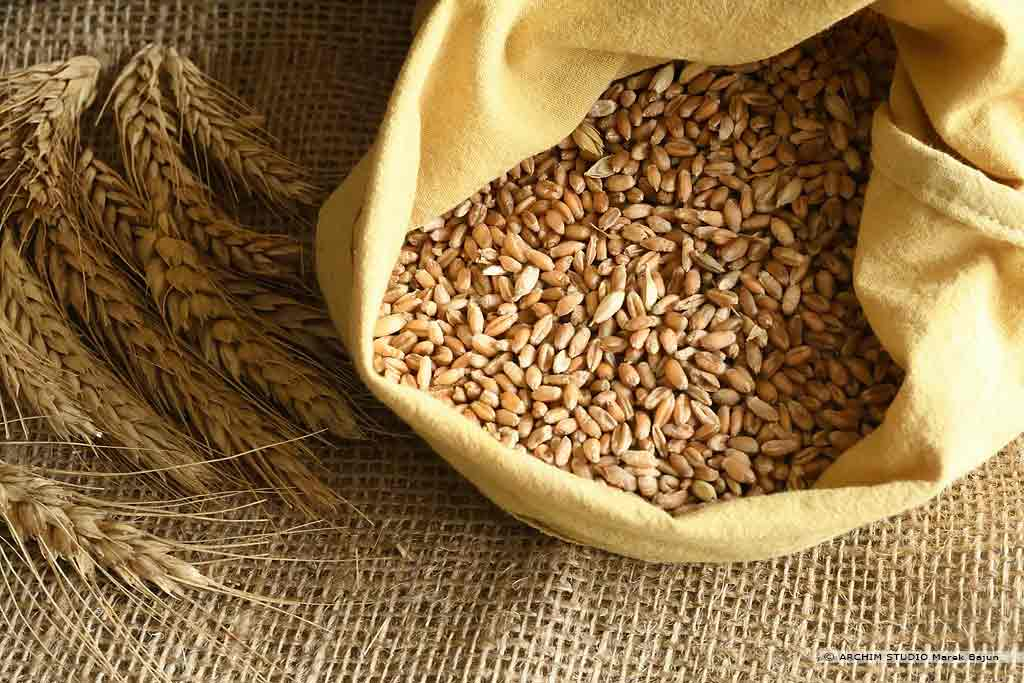 Własna mąka żytnia- ziarno żyta i kłosy