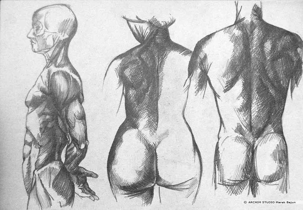 Różnice budowy ciała