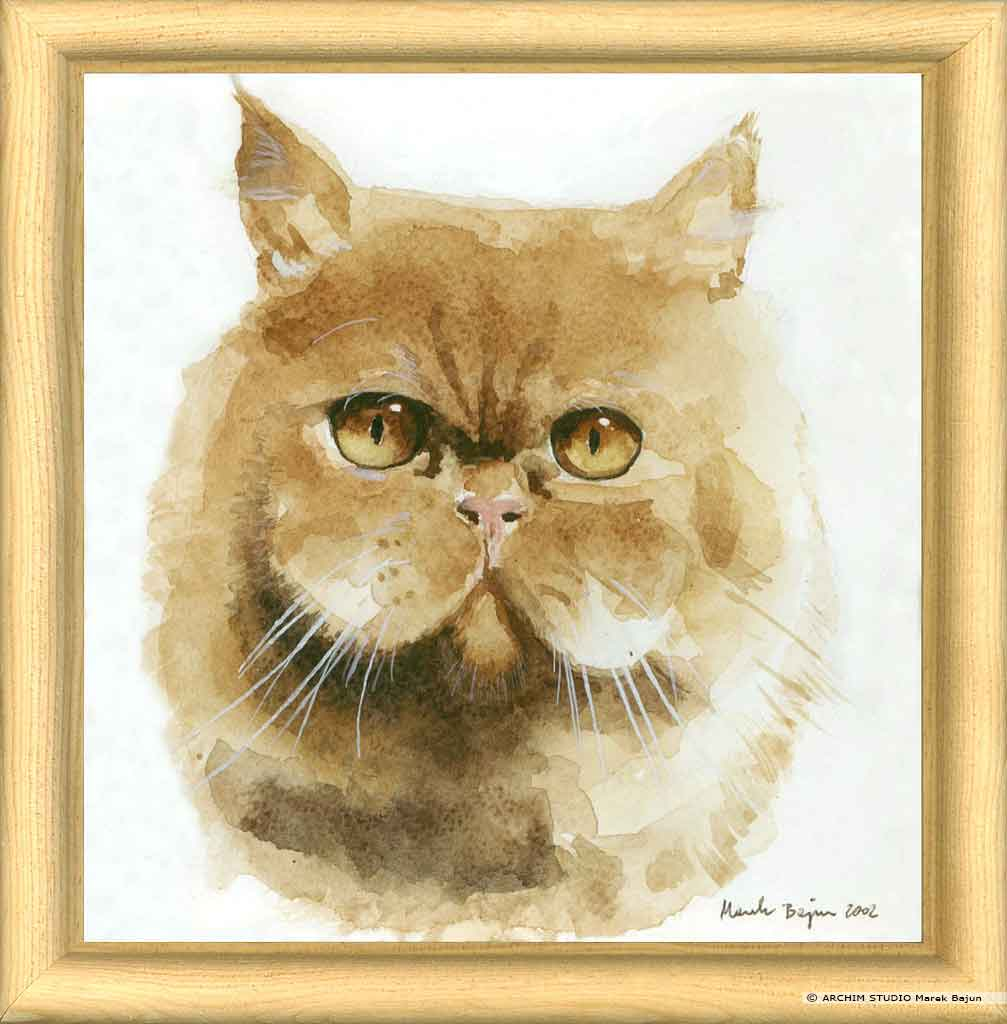 Koci portret
