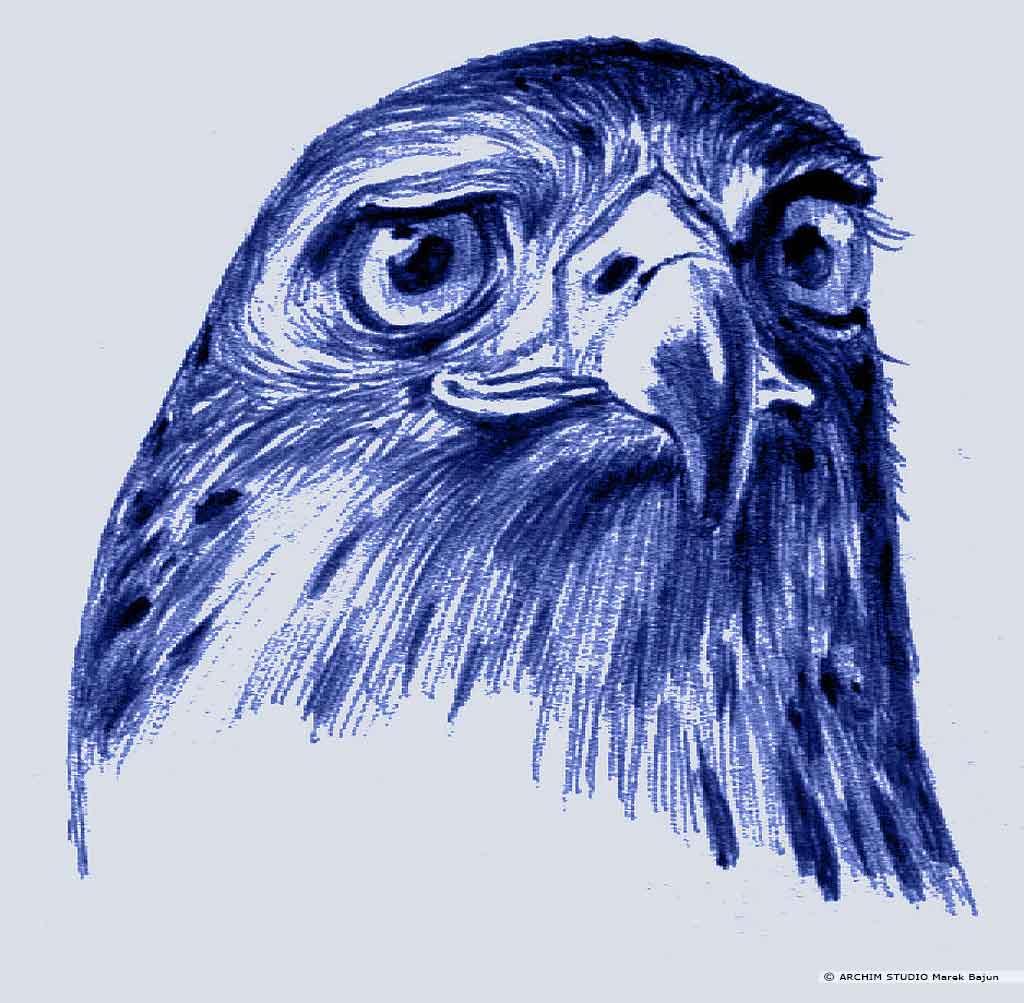 Głowa orlika