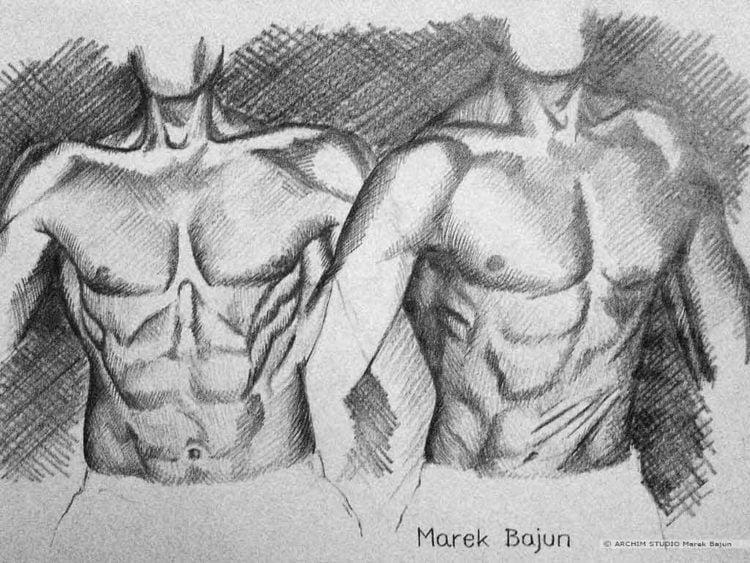 Rysunek mięśni tułowia